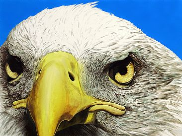 PERFECT VISION - BALD EAGLE by Cindy Gage