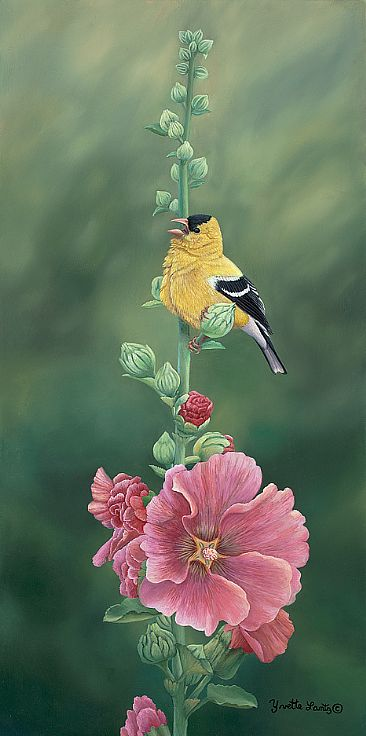 Goldfinch and Hollyhock - Goldfinch by Yvette Lantz