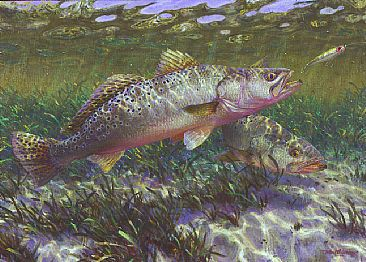 Spotted sea trout painting art by mark susinno for Texas saltwater fish