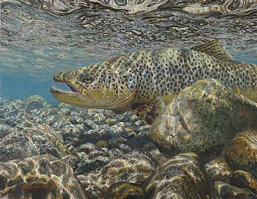 AFTER THE BATTLE - Brown trout by Mark Susinno