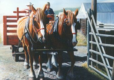 Feeding Time - Shire Draft Horses by Linda Parkinson