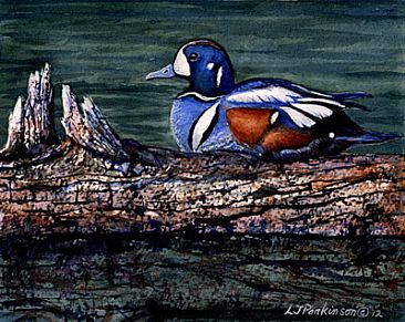 Tranquility - Harlequin Duck (male) by Linda Parkinson