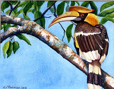 Great Indian Hornbill -  by Linda Parkinson