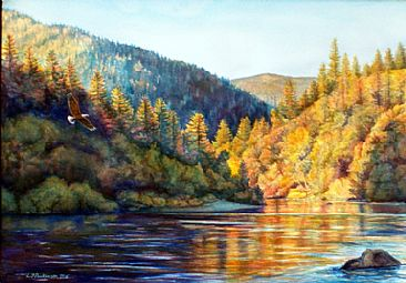 Klamath Gold - Klamath River, Bald Eagle by Linda Parkinson