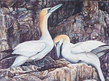 The Promise - Northern Gannets by Linda Parkinson