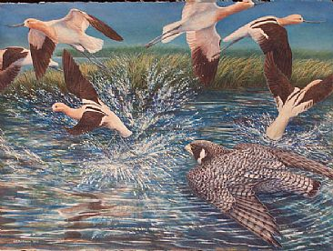 Avocet Rush - Peregrine Falcon & American Avocets by Linda Parkinson