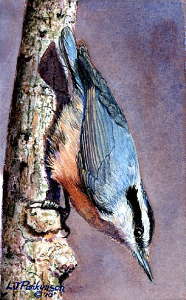 Headin' Down (SOLD) - Red Breasted Nuthatch by Linda Parkinson