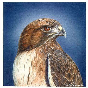 Red-Tail Portrait - Red-Tail Hawk by Linda Parkinson