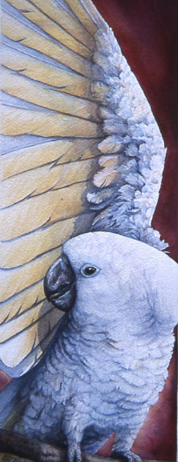 Sunny Side Up - White Umbrella Cockatoo by Linda Parkinson
