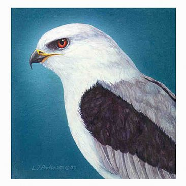 White-Tail Kite Portrait - White-Tail Kite by Linda Parkinson