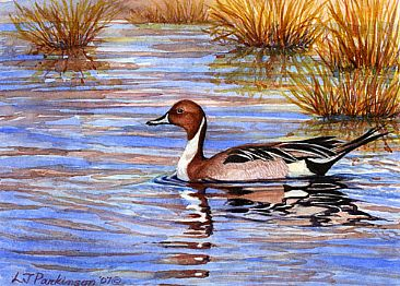 Pintail Drake -  by Linda Parkinson