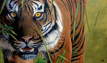 Sumatran Tiger - Tiger by Jonathan Truss