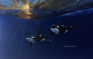 Pacific Dawn - Orca by Jonathan Truss