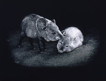 Dos Amigos - Collared Peccaries by Diane Versteeg