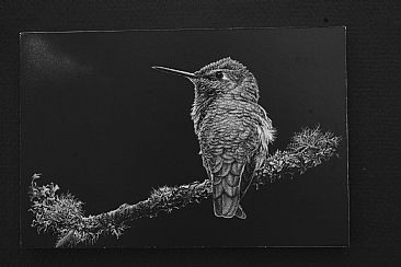 Object of His Affection/Diptych Part 2 - Female Anna's Hummingbird by Kathleen  Dunn