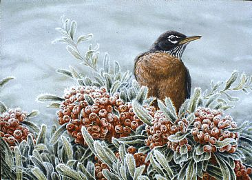 Happy Hour - Robin in Pyracantha by Kathleen  Dunn