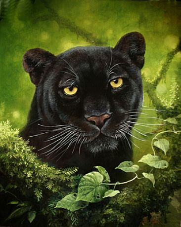 ponytail lean physic piercing eyes looked wild cat lol black jaguar