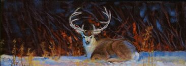 Snow Mulie - Mule Deer Buck by Betsy Popp