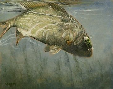 Strike One - Large Mouth Bass by Betsy Popp