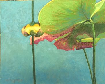 Under The Lilies - Lily Pads by Betsy Popp