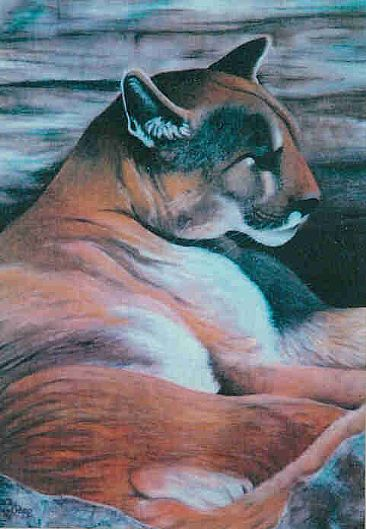 Peaceful Moment - Mountain Lion by Betsy Popp