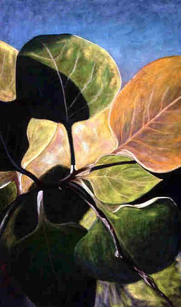 Leaf & Light - plant forms by Betsy Popp
