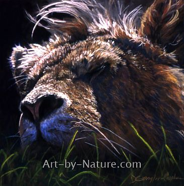 Sleepy Head - African Lion by Deb Gengler-Copple