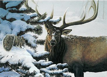 Bull Session - Elk and squirrel by Christopher Walden
