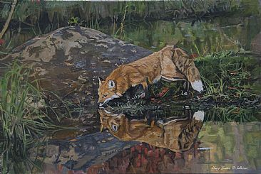 Fox Drinking - A red fox drinking from a Minnesota pond. by Mary Louise O'Sullivan