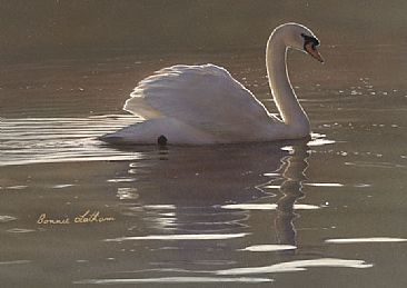 Peaceful Waters - Mute Swan - Mute Swan by Bonnie Latham