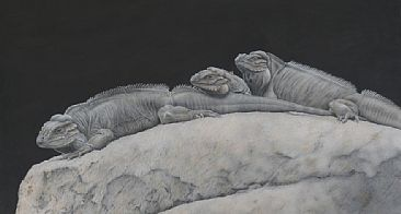 Our Dinosaurs - Rhinoceros Iguanas by Sandra Temple