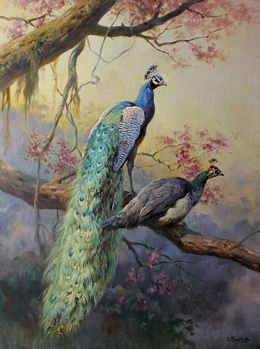 Peacocks - Peacocks by Sergio Budicin
