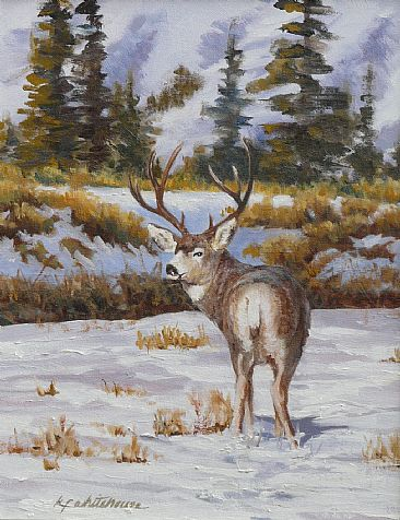 Buck Lookin' Back - Mule Deer by Kitty Whitehouse