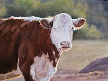 Hereford - Evening Light SOLD - Hereford cow by Sally Berner