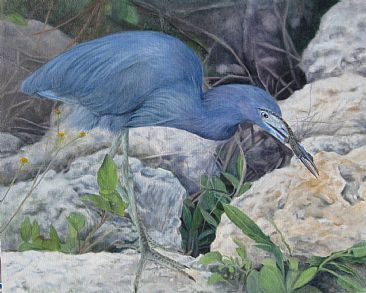 Snack Attack - Little Blue Heron with lizard by Sally Berner