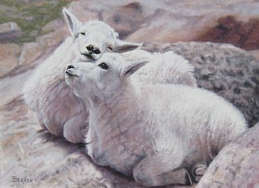 The Kids on Mt. Evans - Mountain Goat Kids snuggling on Mt. Evans in Colorado by Sally Berner