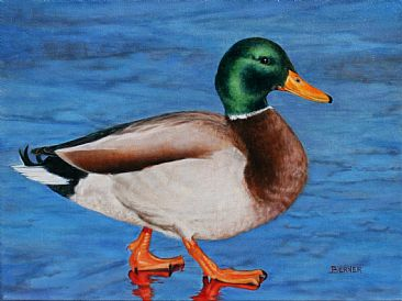 Walking on Thin Ice - Mallard by Sally Berner