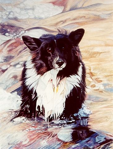 Skye in Water - Border Collie by Sally Berner