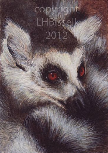 Ring Tailed Lemur - Ring Tailed Lemur by Lauren Bissell