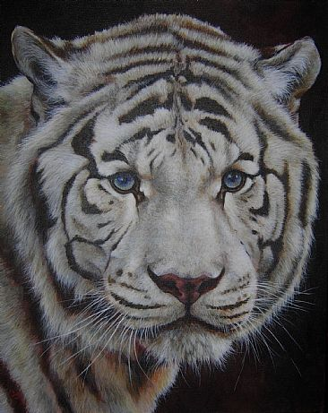 Star of India - White Bengal Tiger by Lauren Bissell