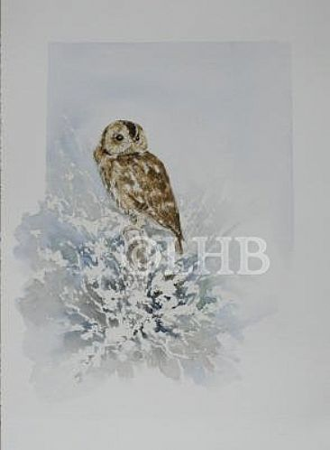 December Morning- Tawny Owl - European Tawny Owl by Lauren Bissell