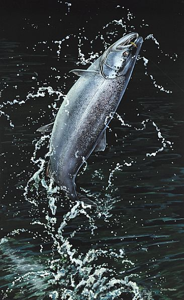 Atlantic Acrobat - Atlantic Salmon by Curtis Atwater