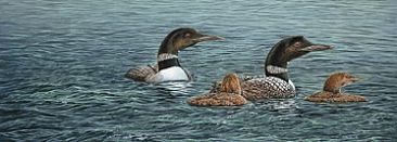 Loon Family - Common Loons by Curtis Atwater