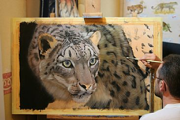 Jason Morgan Wildlife Specializing In Big Cats And