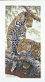 Nature's Pattern - African Leopards by Dennis Curry&nbsp(2)