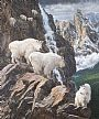 Cliffhangers - Mountain Goats by Beth Hoselton (2)
