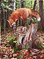 Hide and Seek - red fox and Eastern chipmunk (sold) by Beth Hoselton&nbsp(2)