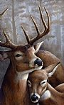 Moonlight (Sold)  - Deer by Claude Thivierge&nbsp(2)