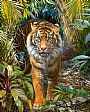 OUT OF THE SHADOWS - SUMATRAN TIGER by Stephen Jesic&nbsp(2)