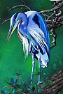Solitary Blue - Great Blue Heron by Patsy Lindamood&nbsp(2)